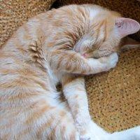 Нос закрываю , к холоду ! :: Мила Бовкун