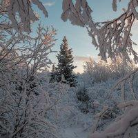Зимой и летом стройная ..... :: Олег Кулябин