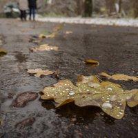 Такая осень - дождь со снегом... :: Александр Орлов