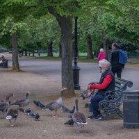В Гайд парке. :: Сергей Исаенко
