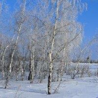 Хорошо прогуляться в зимнюю рощу :: Андрей Заломленков