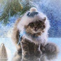 Вот и снег пошел! :: Ирина Приходько