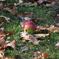 Яблоки на листья :: Наталья Джикидзе (Берёзина)