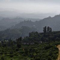 В краю тамилов. Чайные плантации. Land of the Tamils. :: Юрий Воронов
