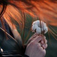 хлопковое тепло :: Анастасия Гусарова