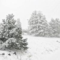 Зима на Ай-петри :: Николай Ковтун