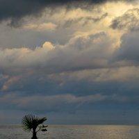 Море... :: Светлана