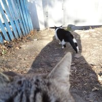 Кошачий сглаз... :: Алекс Аро Аро