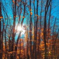 Осень :: Алексей Сазонов