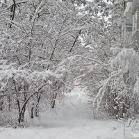 Снежно и вьюжит :: Лидия (naum.lidiya)