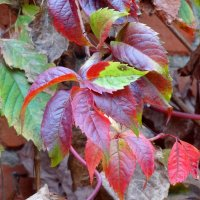 Окрасила осень... :: Тамара (st.tamara)