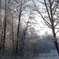Шуваловский парк. :: Лариса (Phinikia) Двойникова