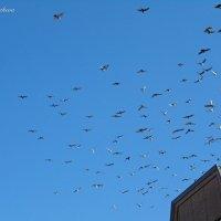 Птицы в небе :: Nina Yudicheva