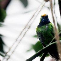 Тропические птицы :: Валерий Гришин
