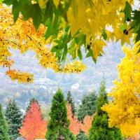 Осень в Гренобле :: Наталия