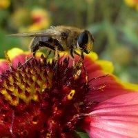 пчелка :: Юлия Богданова