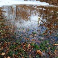 Что-то резко потеплело и трава зазеленела.. :: Андрей Заломленков