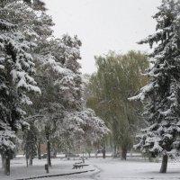 """""""Одиноко""""стоящая ива. :: Вячеслав Медведев"""