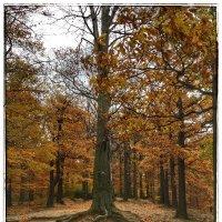 Деревья в парковом комплексе замка Ксенз :: Николай Милоградский