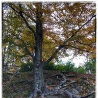 Сказочные деревья в парковом комплексе замка Ксенз :: Николай Милоградский
