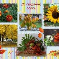 До свидания, осень! :: Татьяна Смоляниченко