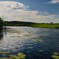 Река Судость :: Александр Березуцкий (nevant60)