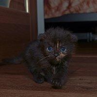 Я просто маленькая голубоглазая пантера... :: Александр Бойко