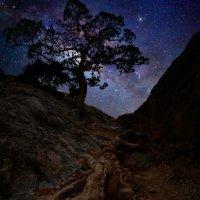 Можжевельник и галактика Млечный Путь :: Александр Михайленко