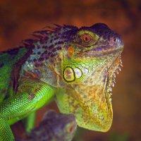 Юный дракон :: Валерий Гришин