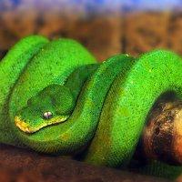 Вот он какой -зеленый змий! :: Валерий Гришин