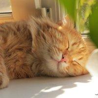 Сладкий сон в полдень :: Добрый Ёж