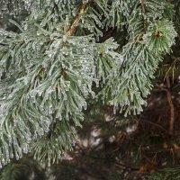 Ледяной дождь :: Анатолий Цыганок