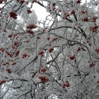 после ледяного дождя :: Svetlana (Lucia) ***
