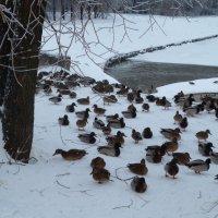 холодно, очень птичкам холодно ... :: Svetlana (Lucia) ***