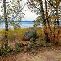 И на камнях растут деревья... :: Sergey Gordoff
