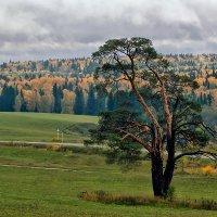 Осень :: Олег Резенов