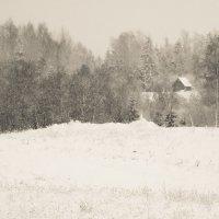 После метели - в лесу :: Юрий Бондер