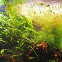 Подводный интерьер аквариума :: Dmitry Swanson