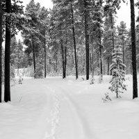 В лесу зима. :: Галина Полина
