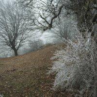 ...где осень зиму повстречала ... :: Евгений Khripp