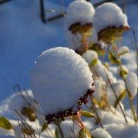 Снежные шаочки :: Светлана