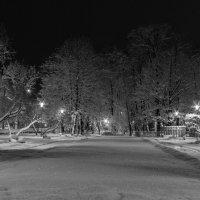 В зимнем парке :: shvlad