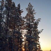 Мороз и солнце :: Ольга