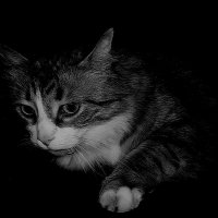 А если бы Малевичу попался вместо кисти кот..... :: Tatiana Markova