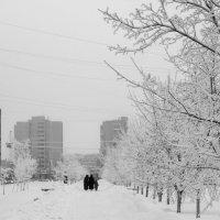 Прогулка :: Ольга Лапшина