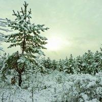Зимняя тема 17 :: Игорь Александрович Оренбург