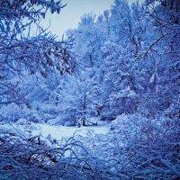 Зимняя тема 8 :: Игорь Александрович Оренбург