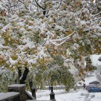 Красоту снегом не спрячешь! :: Вячеслав Медведев