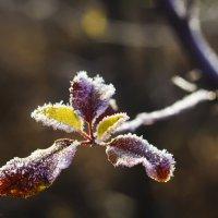 Ноябрьские морозы :: Ksyusha Pav
