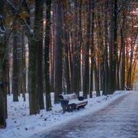 В зимнем парке... :: Елена Фролкова